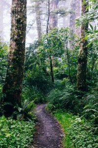 Sådan kan du gøre en forskel for at bevare regnskoven